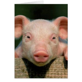Granja de cerdo - cara del cerdo tarjeta de felicitación