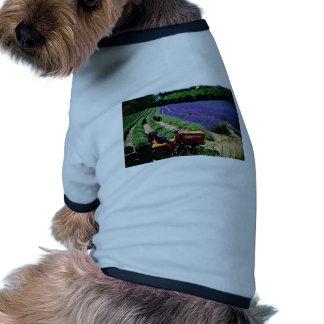 Granja de la lavanda del jersey, Islas del Canal d Camisetas De Perro