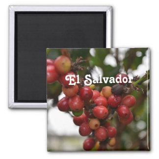 Granos de café de El Salvador Imanes De Nevera
