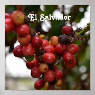 Granos de café de El Salvador Poster