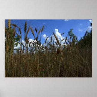 granos de oro e impresión de los cielos azules poster