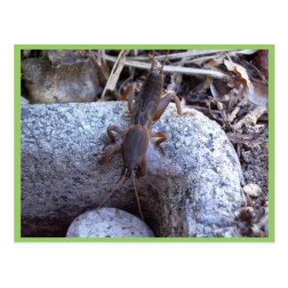 Grillo de topo en la piedra postal