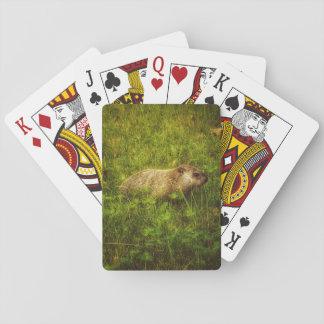 Groundhog en naipes de un campo