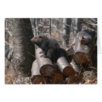 Groundhog en tarjeta del Woodpile