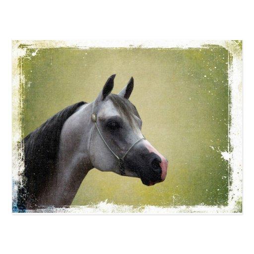 Grunge árabe del caballo postal