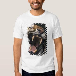Gruñido del tigre de Bengala (Panthera el Tigris Camisetas