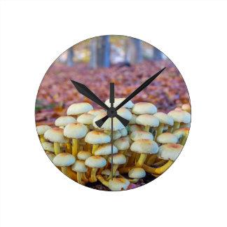 Grupo de setas en bosque de la haya de la caída reloj redondo mediano