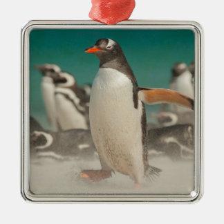Grupo del pingüino en la playa, Malvinas Adorno Navideño Cuadrado De Metal