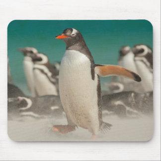 Grupo del pingüino en la playa, Malvinas Alfombrilla De Ratón