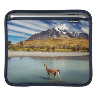 Guanaco que cruza el río en Torres del Paine Funda Para iPads
