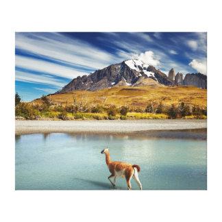 Guanaco que cruza el río en Torres del Paine Impresión En Lienzo