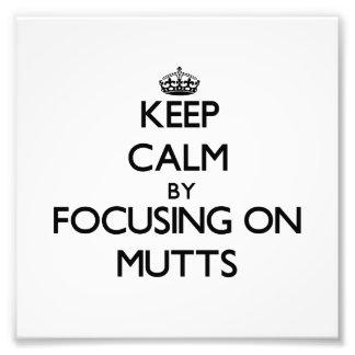 Guarde la calma centrándose en Mutts
