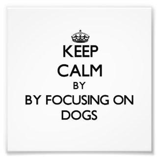 Guarde la calma centrándose en perros