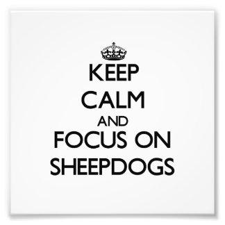 Guarde la calma y el foco en perros pastor