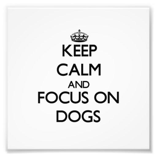 Guarde la calma y el foco en perros cojinete