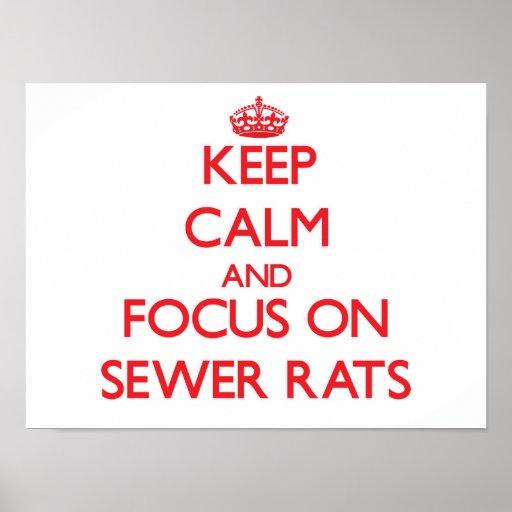 Guarde la calma y el foco en ratas de alcantarilla impresiones