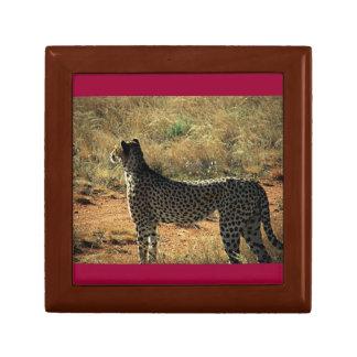 Guepardo de Samburu Cajas De Regalo