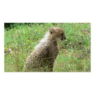 guepardo joven tarjeta personal