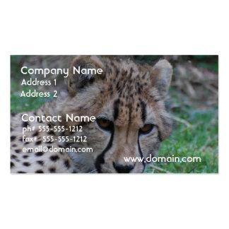 Guepardo joven tarjeta de visita