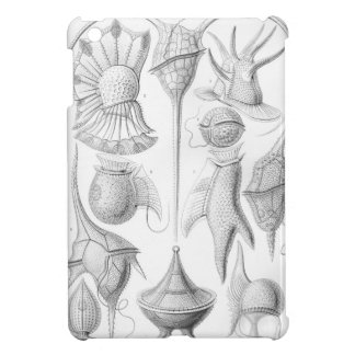 Gusanos de Ernst Haeckel Peridinea
