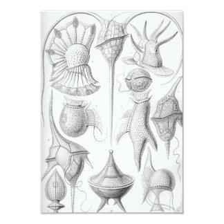 Gusanos de Ernst Haeckel Peridinea Invitación 8,9 X 12,7 Cm