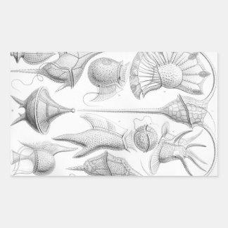 Gusanos de Ernst Haeckel Peridinea Pegatina Rectangular