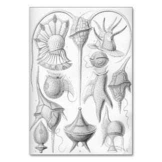 Gusanos de Ernst Haeckel Peridinea Tarjeta