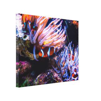 Hábitat de Clownfishes Lienzo