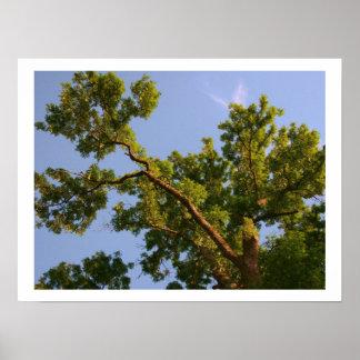 Hacia el cielo árbol poster