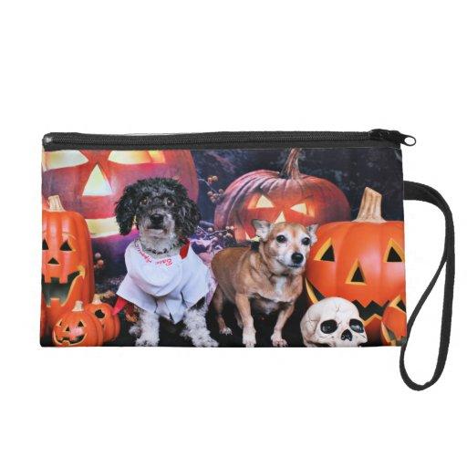 Halloween - caniche Bam - chihuahua de Molly