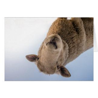 HAMbWG - tarjeta de felicitación - ovejas
