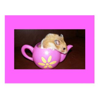 Hámster en postal de la foto del pote del té