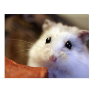 Hamster Postcard 葉書き