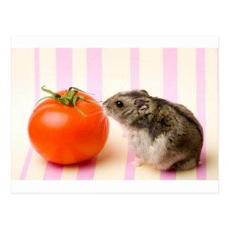 Hámster y tomate postal