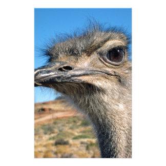 Harry la avestruz feliz papelería