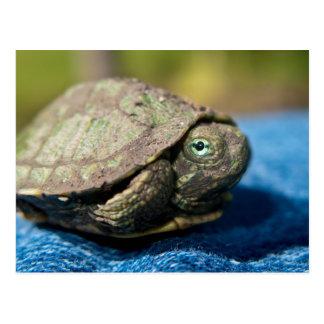 Hatchling de la tortuga en la postal del dril de a