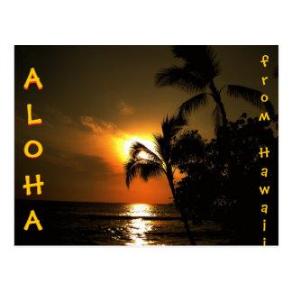 Hawaiana de la puesta del sol de la palmera de postal