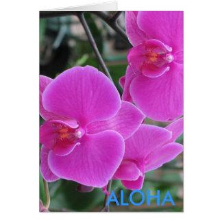 Hawaiana Felicitaciones