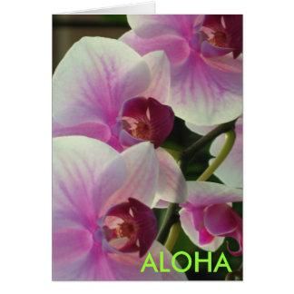 Hawaiana Felicitacion