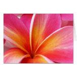 Hawaiian rosado de la flor de Hawaii del Frangipan Tarjeton