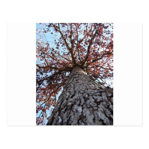 Hay esperanza en un árbol postales