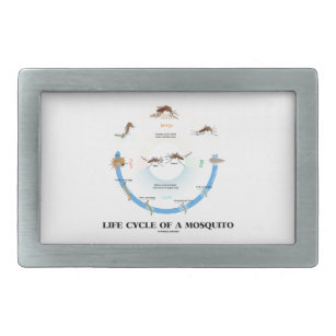 Hebilla De Cinturón Rectangular Ciclo vital de un mosquito (Imago de las