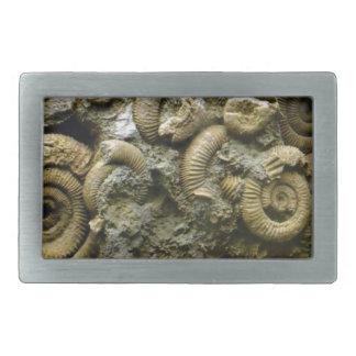 Hebilla De Cinturón Rectangular fósiles encajados de los caracoles