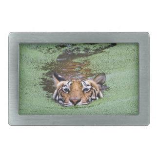 Hebilla De Cinturón Rectangular Natación del tigre de Bengala