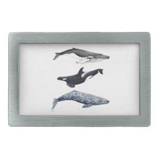 Hebilla De Cinturón Rectangular Orca, ballena jorobada y ballena gris