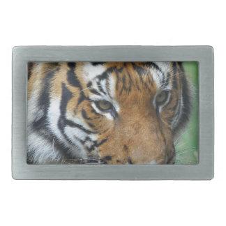 Hebilla De Cinturón Rectangular Primer del tigre del Malay de los alquileres