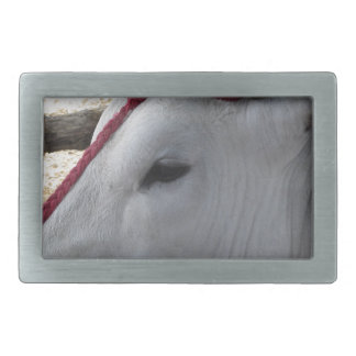 Hebilla De Cinturón Rectangular Retrato del Chianina, raza italiana del ganado