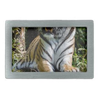 Hebilla De Cinturón Rectangular Tigre de los alquileres en Muenster