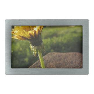 Hebilla De Cinturón Rectangular Wildflower amarillo que crece en piedras en la