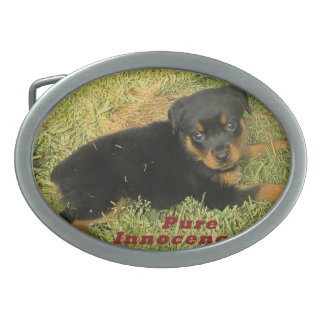 Hebilla Ovalada perrito puro del rottweiler de la inocencia